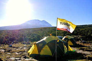 Tusker Scout Team